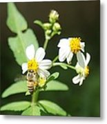 Bee-flower Pollen Metal Print