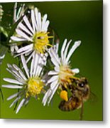 Bee Harvest Metal Print