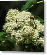 Bee Hovering Over Rowan Truss - Featured 3 Metal Print