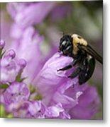 Bee Hug Metal Print