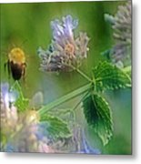 Bee In Catmint Metal Print