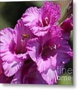 Bee In Pink Gladiolus Metal Print