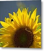 Bee In Sunflower Metal Print