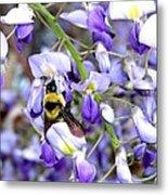 Bee In The Wisteria Metal Print