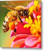 Bee Laden With Pollen Metal Print