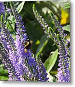 Bee Lavendar Metal Print