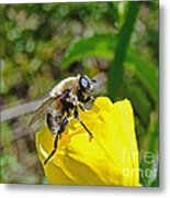 Bee Mimic On Primrose Metal Print