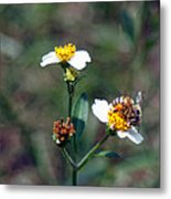 Bee- Nectar Metal Print