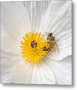 Bee On A Poppy Metal Print