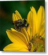 Bee On A Quest Metal Print