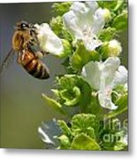 Bee On Basil Metal Print