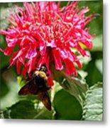 Bee On Bee Balm Flower Metal Print