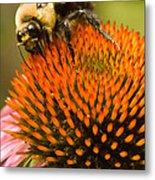 Bee On Coneflower Metal Print