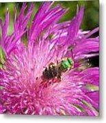 Bee On Corn Flower Metal Print