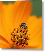Bee On Cosmo Metal Print