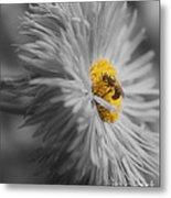 Bee On Daisy Flower Metal Print
