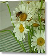 Honey Bee On Daisy Print Photo For Sale Metal Print