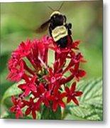 Bee On Flower Cluster Metal Print