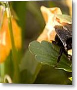 Bee On Leaf Metal Print