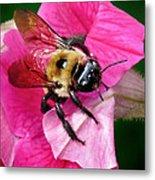 Bee On Petunia Metal Print