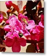 Bee On Pink Blossoms 031015aa Metal Print
