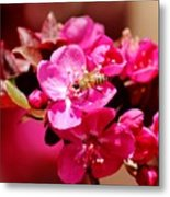 Bee On Pink Blossoms 031015ab Metal Print
