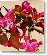 Bee On Pink Blossoms 031015ac Metal Print