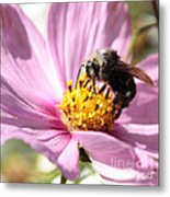 Bee On Pink Cosmos Metal Print
