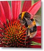 Bee On Red Coneflower 2 Metal Print