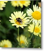 Bee On Yellow Metal Print