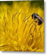 Bee Pollen Metal Print