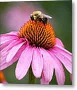 Bee Resting On Cone Flower Metal Print