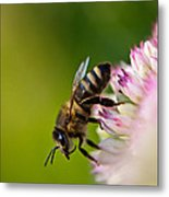 Bee Sitting On A Flower Metal Print