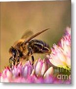 Bee Sitting On Flower Metal Print