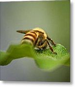 Bee Still Metal Print