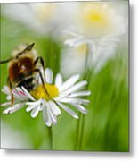Bee The Daisy Metal Print