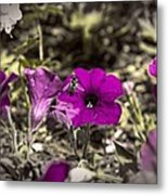 Bee To A Flower Metal Print