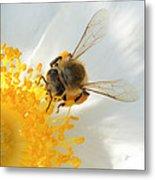 Bee-u-tiful Squared Metal Print