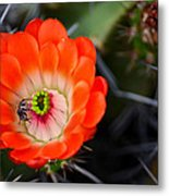 Bee Ware The Thorns Metal Print