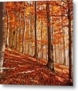 Beech Forest Metal Print