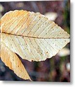 Beech Leaf In Winter Metal Print