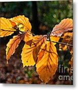 Beech Leaves In Winter Metal Print