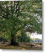 Beech Tree Britain Metal Print