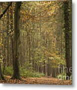 Beech Wood Walk Metal Print