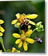 Bees At Work Metal Print