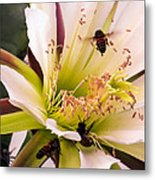 Bees In Blossom Metal Print