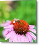 Bees Knees Metal Print