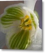 Bee's View Of A Snowdrop Metal Print