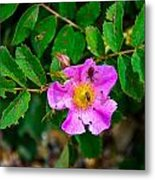 Beetle And Fly On Wild Rose Metal Print