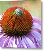 Beetle Bug Metal Print